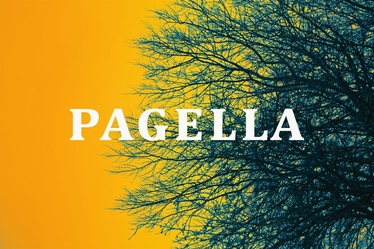 Alsterdamm_Abschlussarbeit_Pagella_Felina-Fiebelkorn_Cover